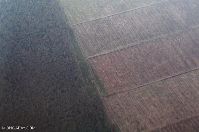 Aerial view of forest and land cleared for oil palm plantations [kalbar_1277]
