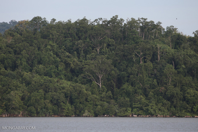 Coastal rainforest in Sukadana [kalbar_1313]