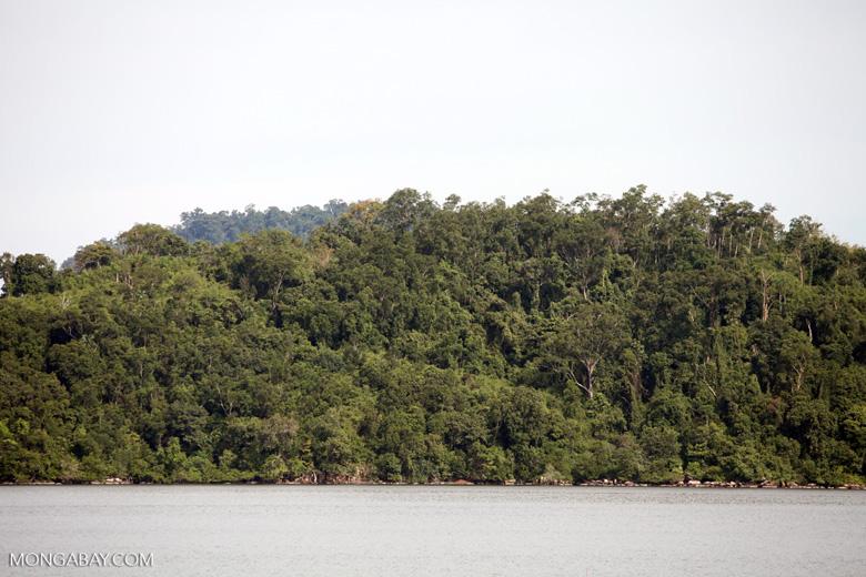 Coastal rainforest in Sukadana