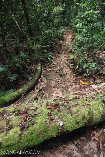 Gunung Palung rainforest