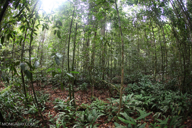 Shrub layer in the rainforest