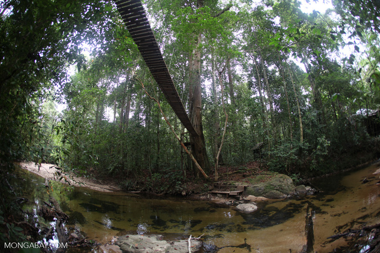 Bridge over a rainforest creek [kalbar_1491]