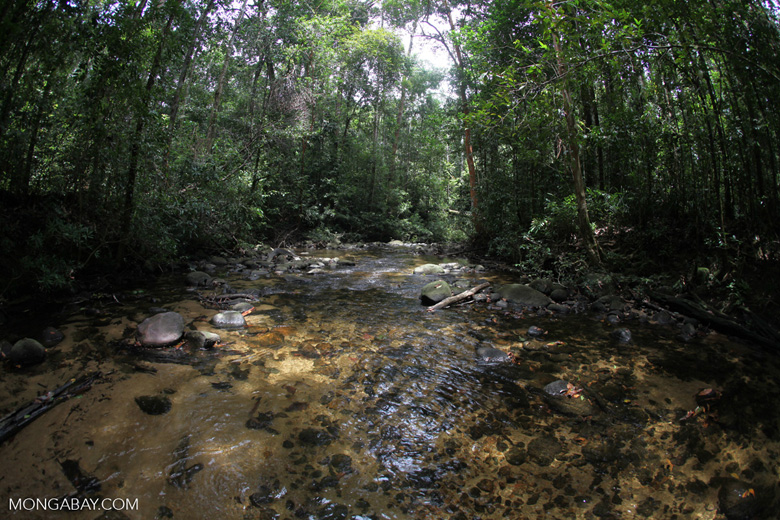 Clearwater rain forest stream in Borneo