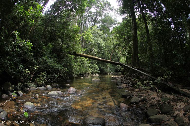Clearwater rainforest stream in Borneo