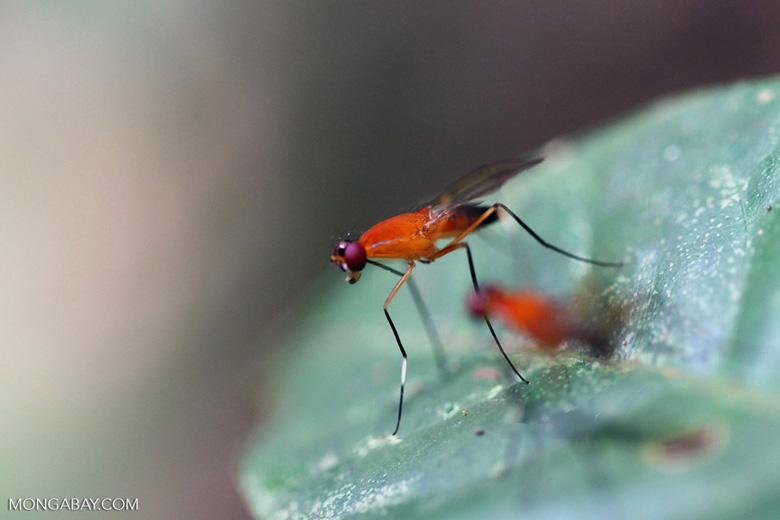 Orange flies with purple eyes