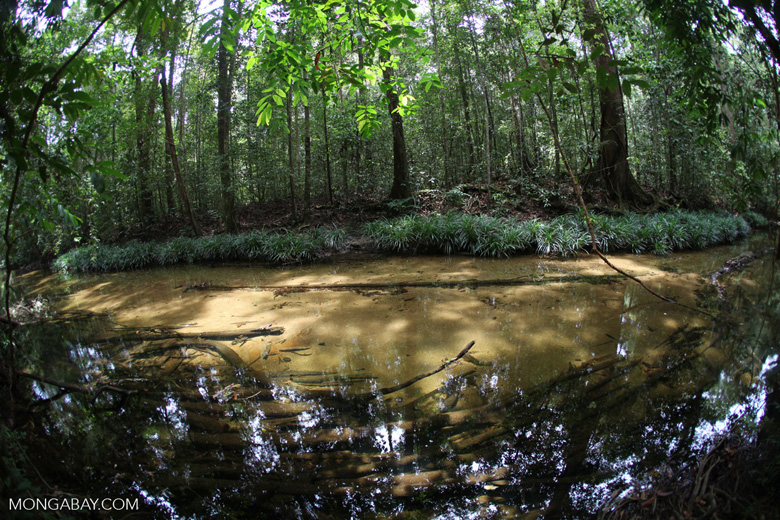 Clearwater jungle creek in Indonesian Borneo (Kalimantan)