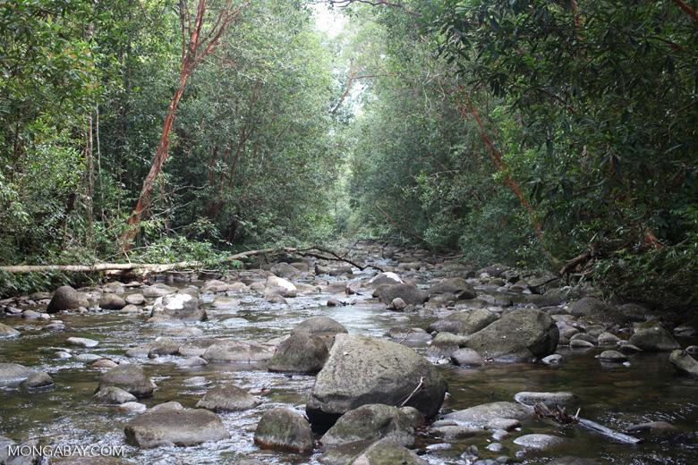 Rainforest stream with boulders [kalbar_1581]