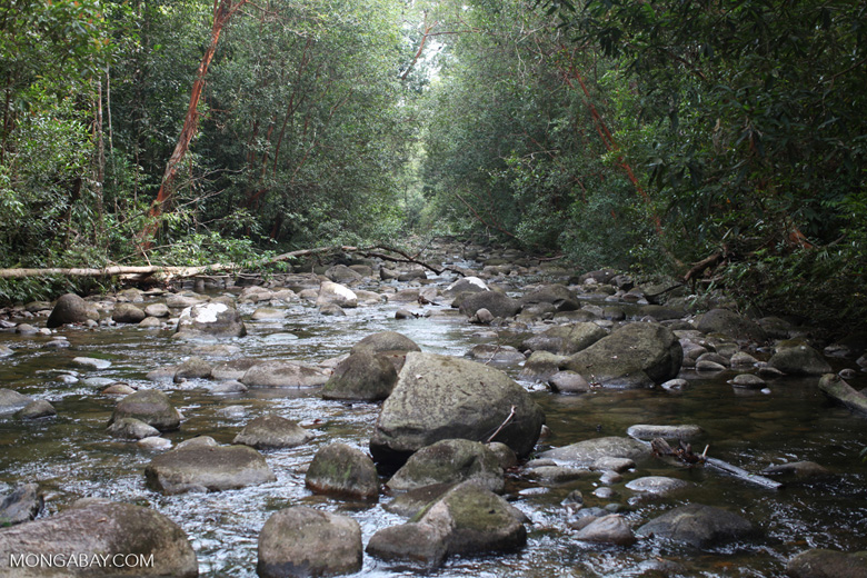 Rainforest stream with boulders