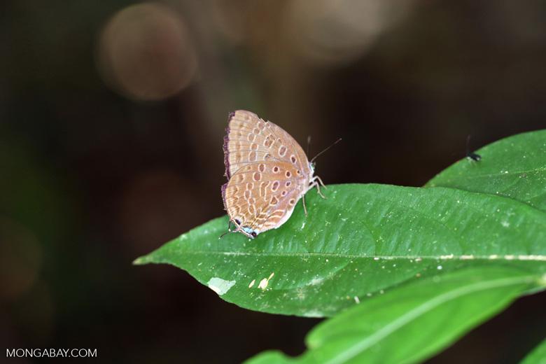 Butterfly [kalbar_2181]
