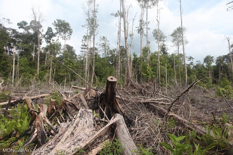 Deforested peatlands in Borneo [kalbar_2203]