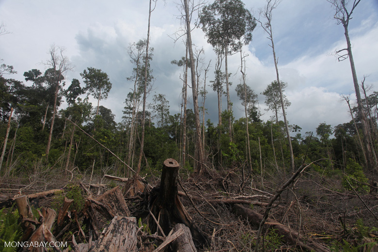 Deforestation in West Kalimantan. Photo by Rhett A. Butler