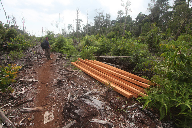 Illegally logged wood [kalbar_1131]