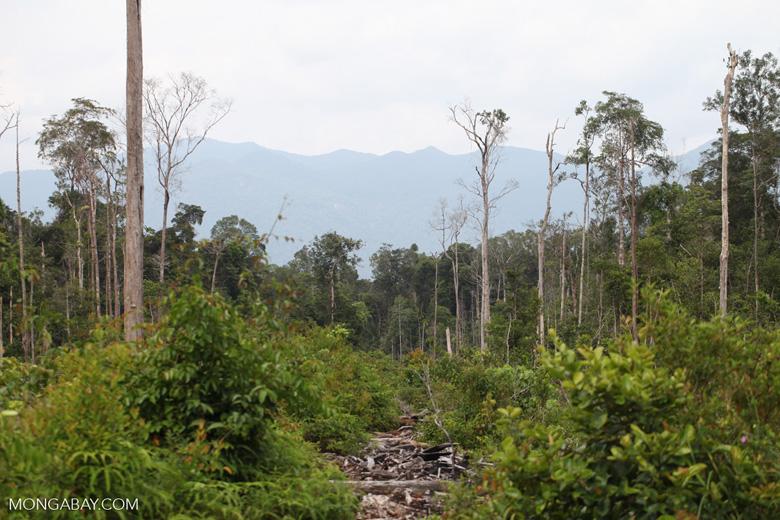 Deforested rainforest in Borneo [kalbar_2240]