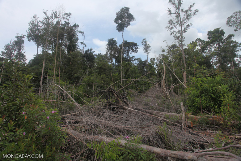 Deforested landscape in Borneo [kalbar_2248]