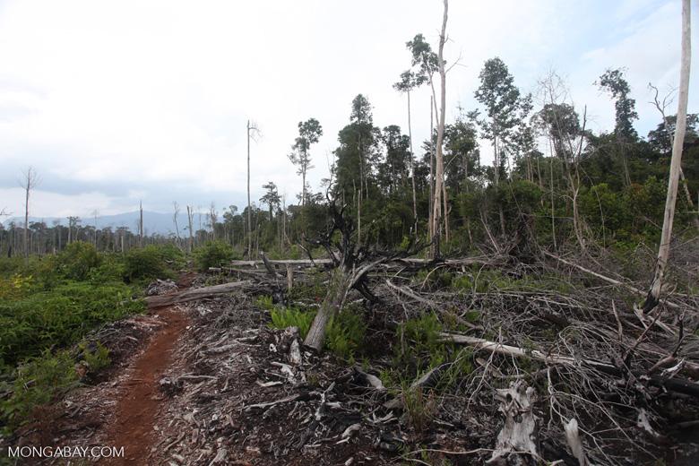 Deforested landscape in Borneo