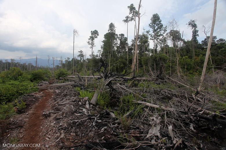 Deforested peatlands in Borneo [kalbar_2249]