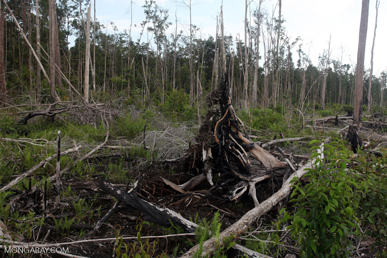 Deforested rainforest in Borneo