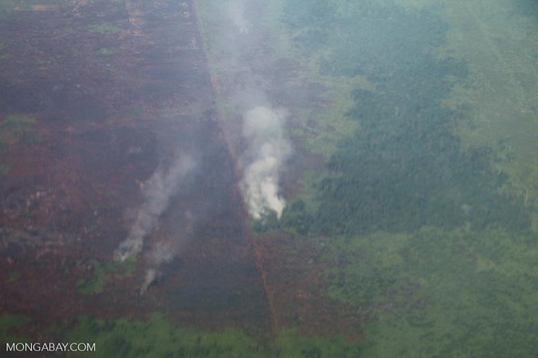 Aerial view of oil palm in West Kalimantan [kalbar_2343]