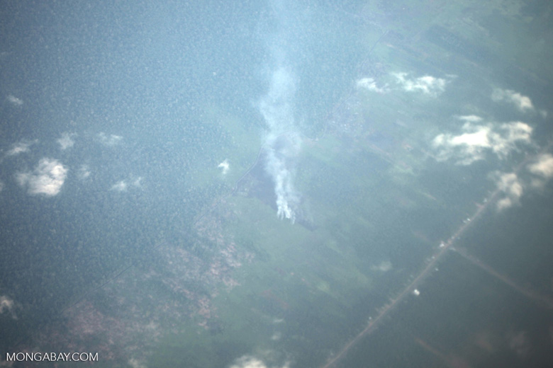 Aerial view of oil palm in West Kalimantan