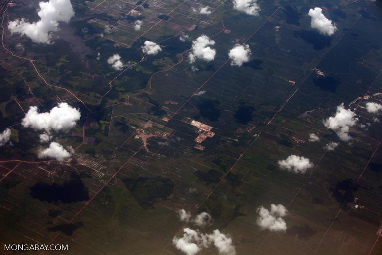 Oil palm development in Central Kalimantan [kalimantan_0009]
