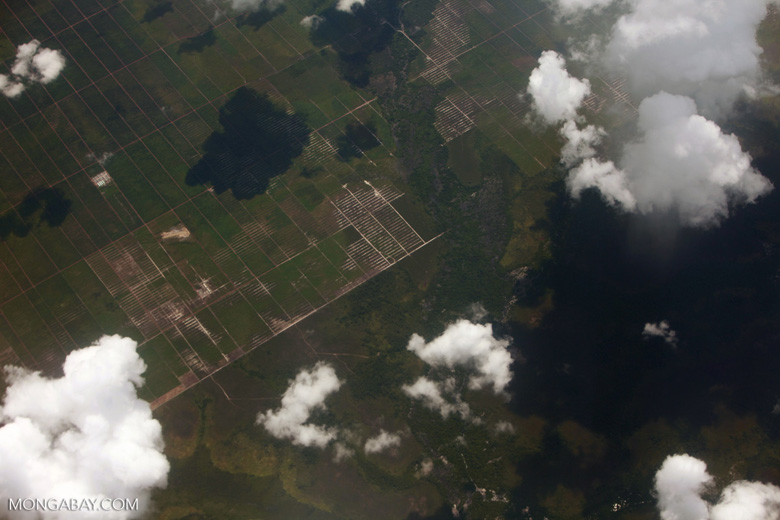 Oil palm development in Central Kalimantan [kalimantan_0011]