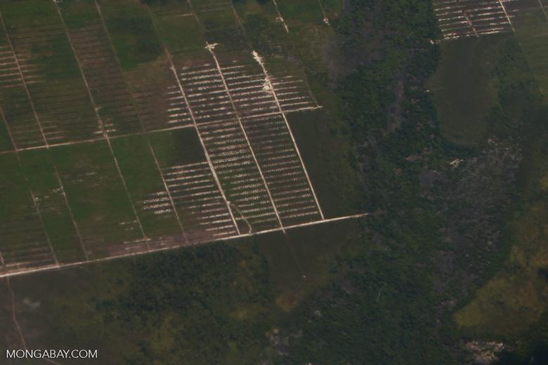 Oil palm development in Central Kalimantan [kalimantan_0012]