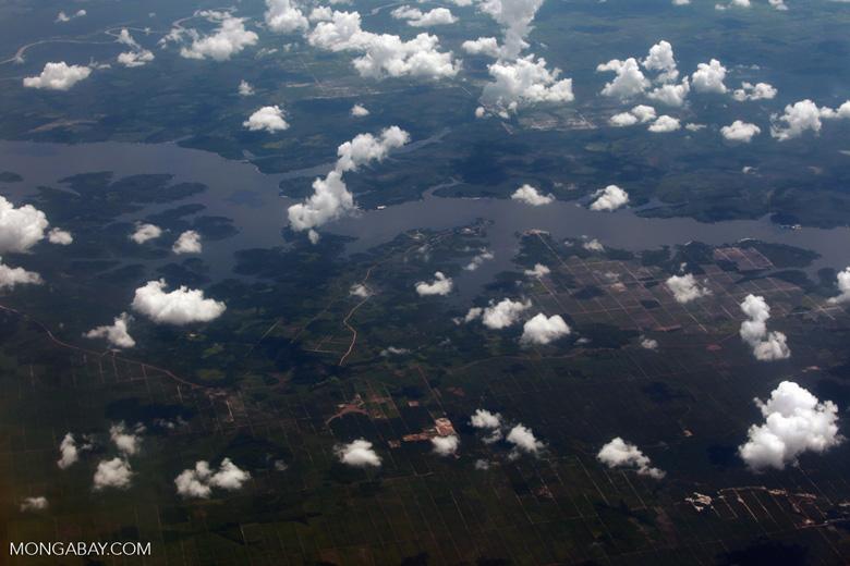 Oil palm development in Central Kalimantan [kalimantan_0013]