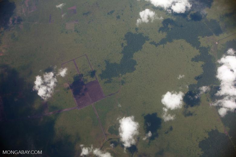 Oil palm development in Central Kalimantan [kalimantan_0015]
