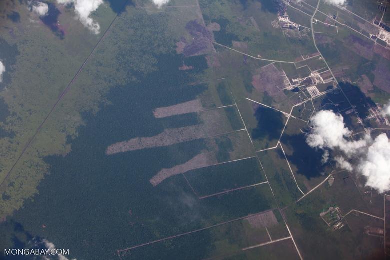 Oil palm development in Central Kalimantan [kalimantan_0017]