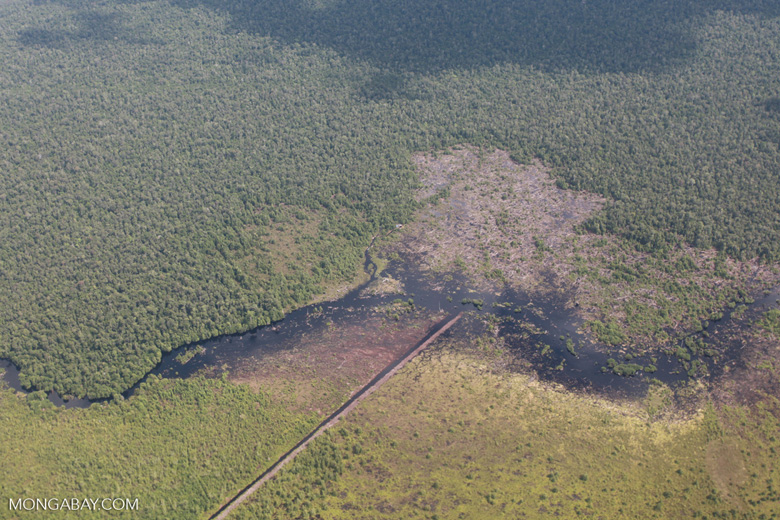 Aerial view of peatland being drained and cleared in Central Kalimantan [kalimantan_0033]