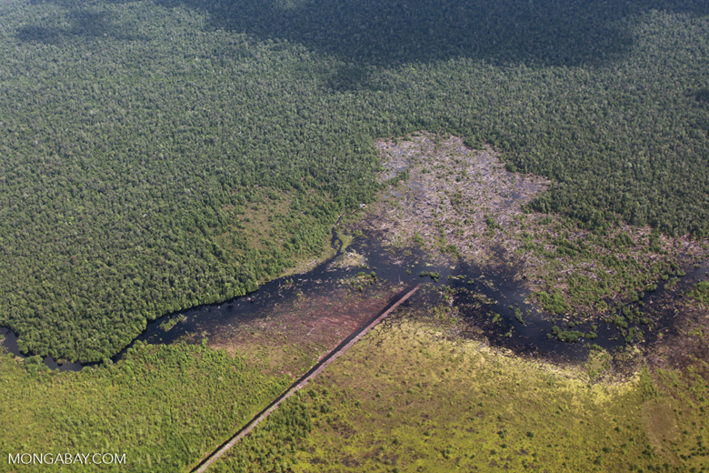 Airplane view of peatland being drained and cleared in Borneo