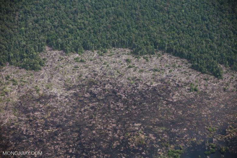 Logged peatland in Borneo
