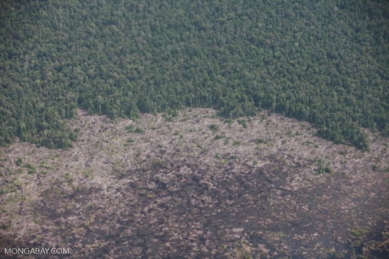 Logged peatland in Central Kalimantan [kalimantan_0037]