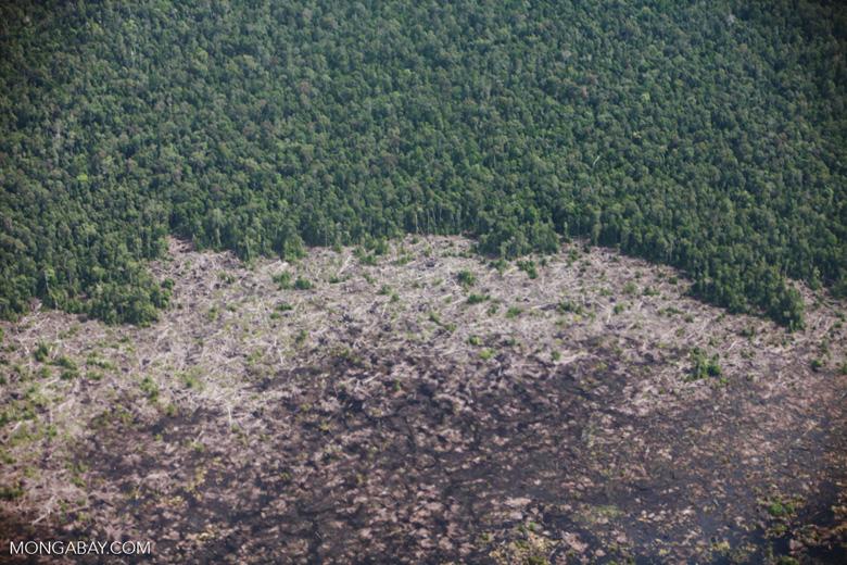 Aerial view of peatland destruction in Borneo [kalimantan_0038]