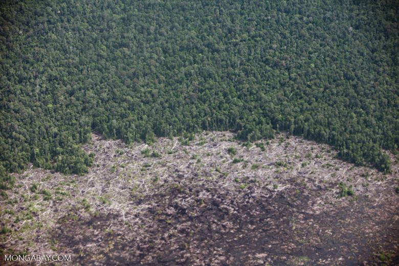 Aerial view of peatland destruction in Borneo