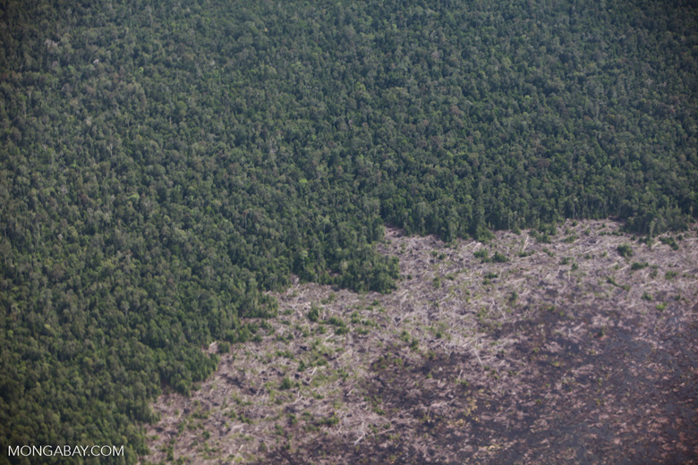 Aerial view of peatland destruction in Borneo [kalimantan_0040]