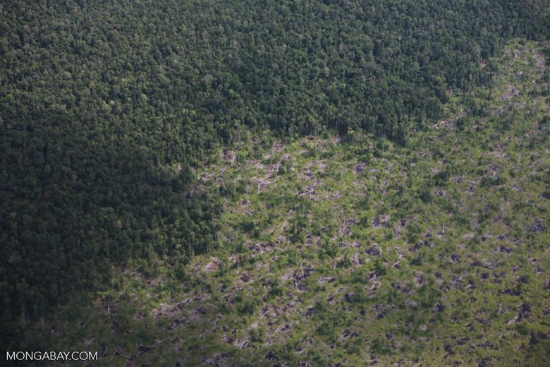 Aerial view of peatland destruction in Borneo [kalimantan_0051]