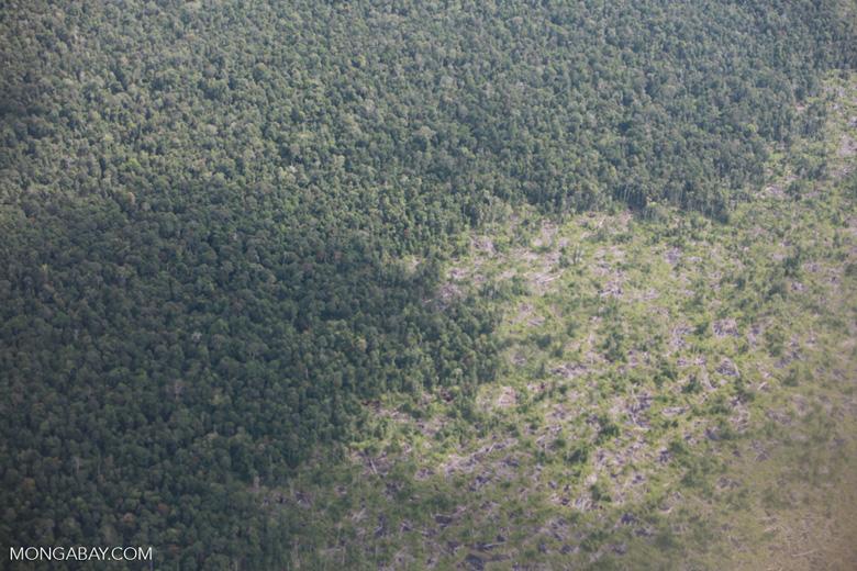 Aerial view of peatland destruction in Borneo [kalimantan_0054]