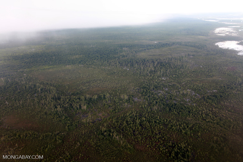 Degraded forest and peatlands in Central Kalimantan