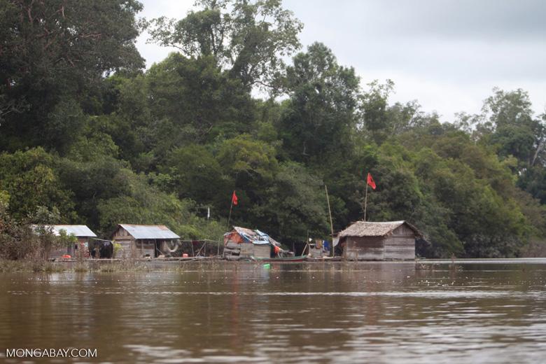 Floating houses near Nyaru Menteng [kalimantan_0133]