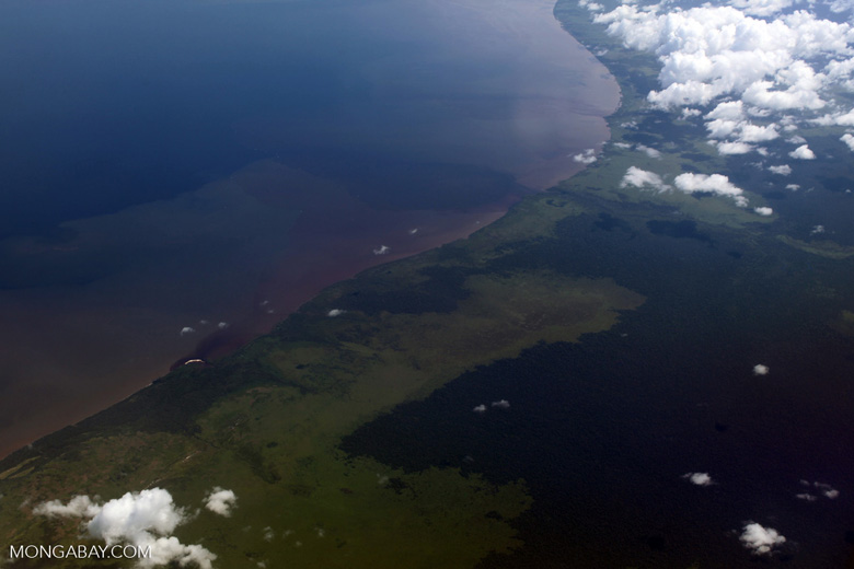 Coastline of Borneo: peatlands and forest