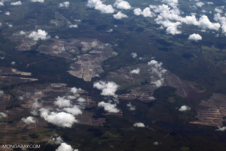 Aerial view of oil palm plantations in Kalimantan