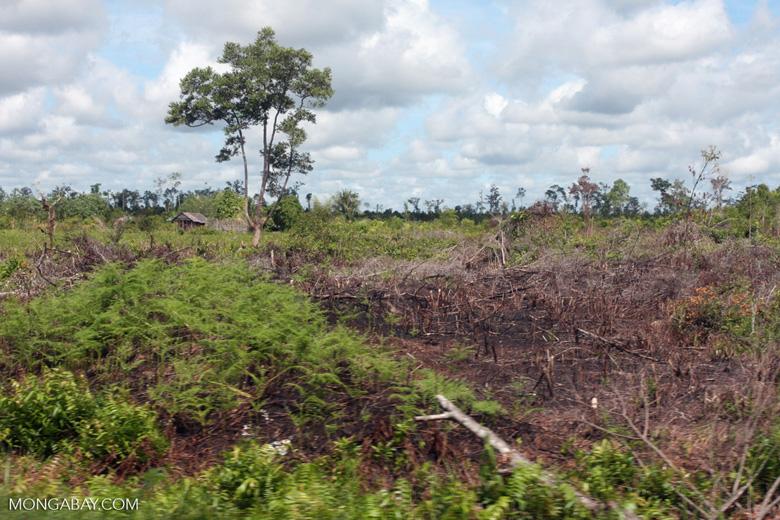 Burned peatland scrub