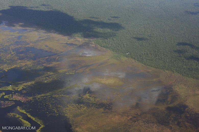 Aerial view of peatlands in Central Kalimantan [kalimantan_9065]