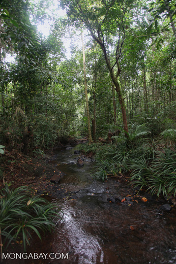 Rain forest creek in Taman Hutan Raya