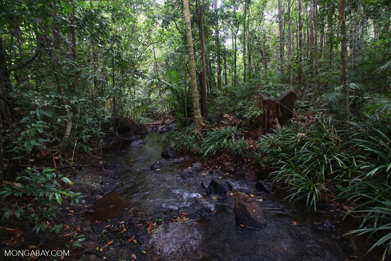 Rain forest creek in Taman Hutan Raya [kalsel_0135]