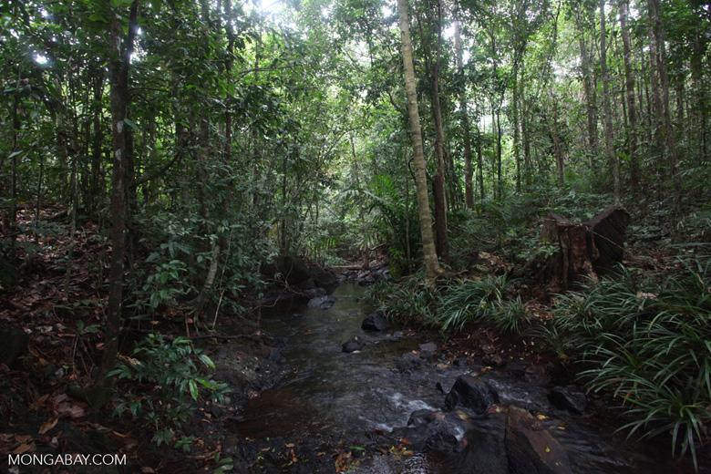 Rainforest creek in Taman Hutan Raya