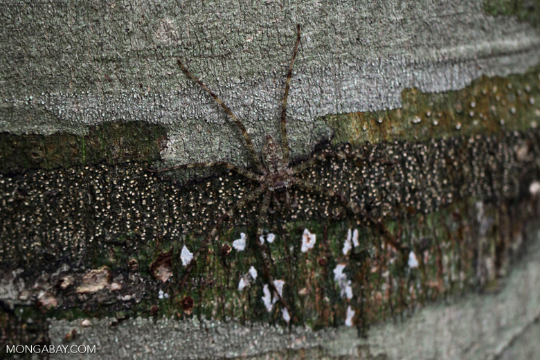 Spider camouflaged on a tree trunk