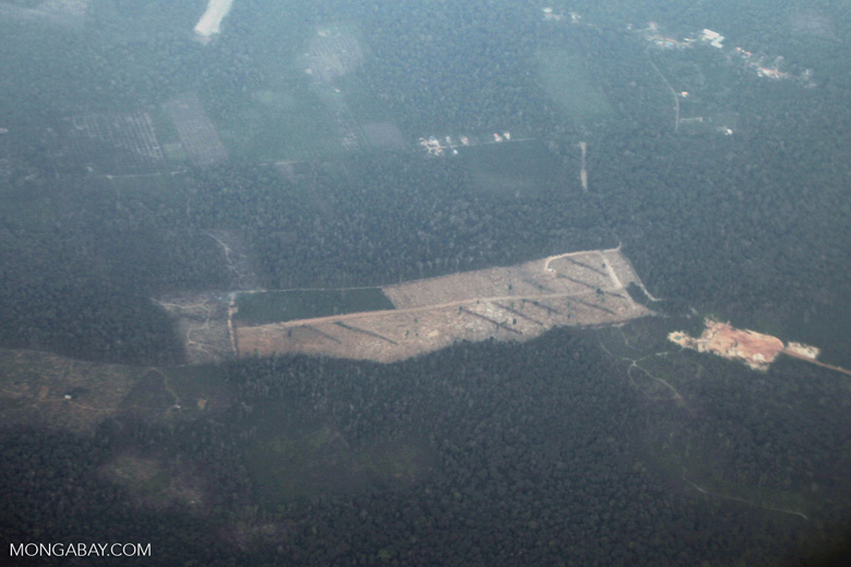 Deforestation and degradation as seen from an airplane in South Kalimantan [kalsel_0242]