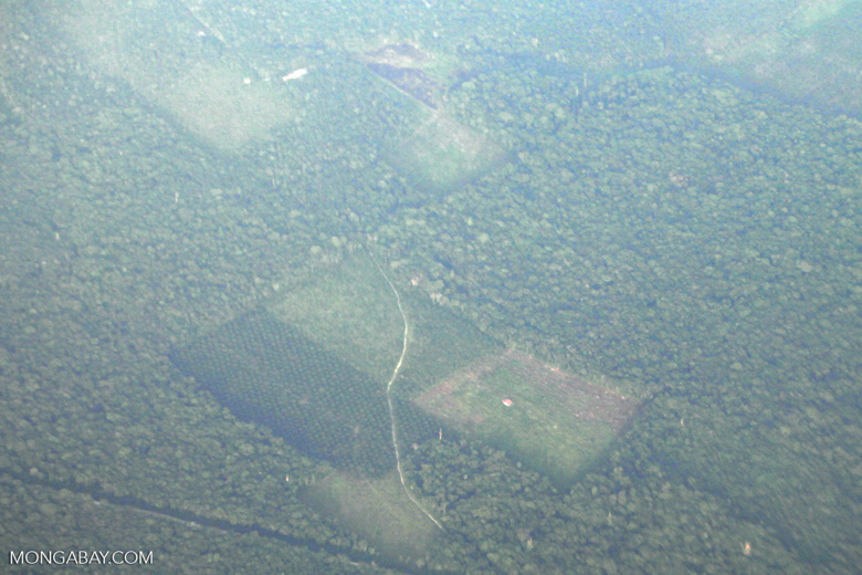 Deforestation and degradation as seen from an airplane in South Kalimantan [kalsel_0243]